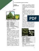 Plantas dicotiledones y monocotiledoneas