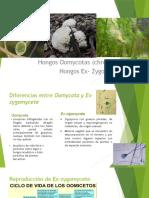 biologia de los hongos.pptx