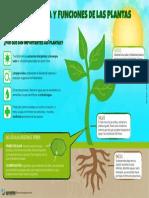 Estructura y Funciones de las Plantas