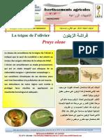 Avertissement agricole N°27. La teigne de l'olivier