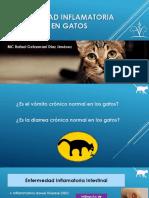 Enfermedad Inflamatoria Intestinal en Gatos