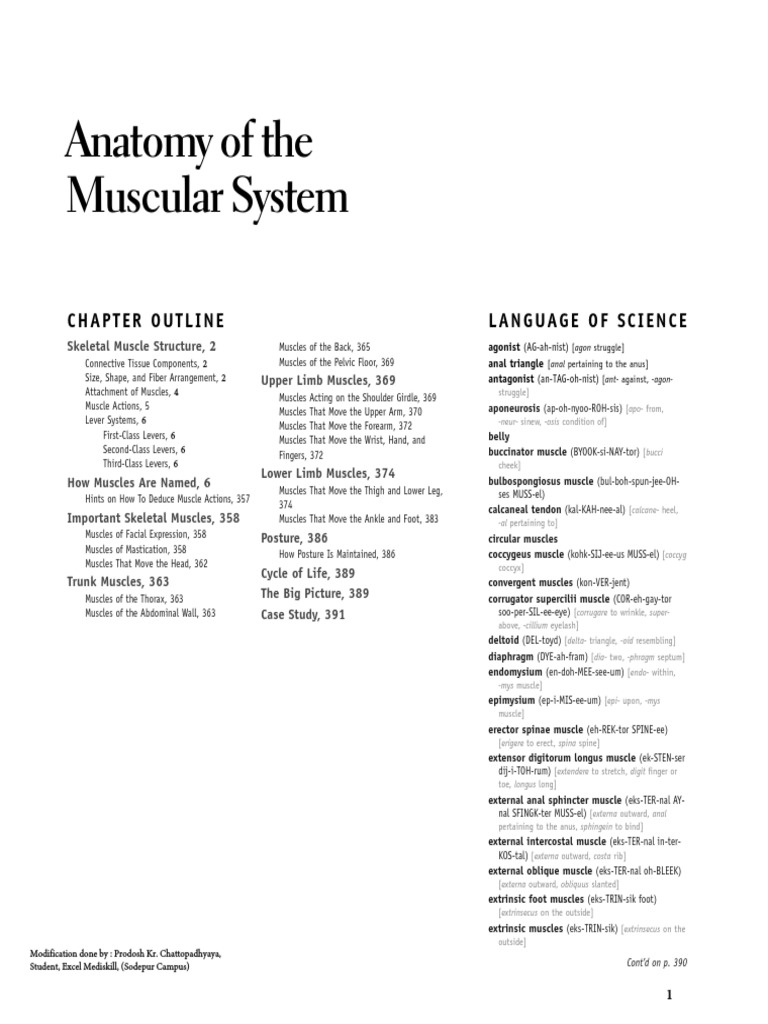 Anatomy Of The Muscular System BW Ch 10