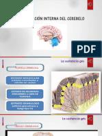 Neuro configuración interna del cerebelo