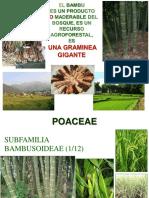 1. Que es un bambú y sus multiples aplicaciones 1.pdf
