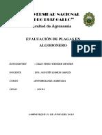 Evaluación de Plagas en Algodonero