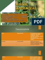 PowerPoint Familia Amaranthaceae