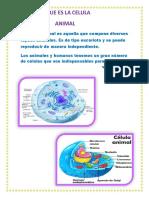 CELULA.docx