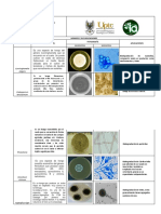 Hongos Final.pdf