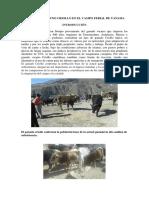 El ganado vacuno Criollo.pdf