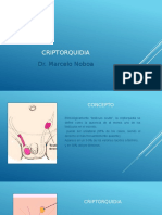 1.criptorquidia