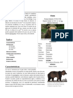 Ursidae - Oso