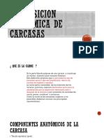 Composicion Anatomica de La Carne 2019