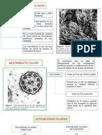 2) Células Ciliadas - Drenaje Mucociliar
