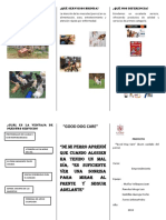 Triptico de Good Dog Care