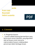 lisosom dan Badan golgi