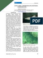 Carrera 2014.Tiburones y Rayas en La Mira Hippocampus 3