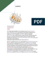 Cresta Mitocondrial