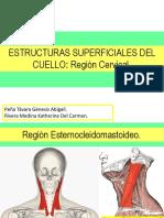 Estructuras Superficiales Del Cuello