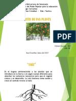 plantas uniformes