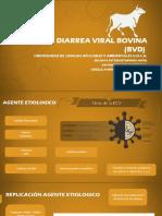 Diarrea viral bovina.pptx