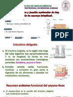 Sistema Urinario Clase 6 Dr. Barón