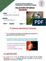 Sistema Reproductor Clase 7 Dr. Barón