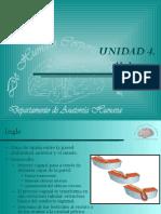 anatomiacanalinguinal-120528212927-phpapp02.pdf