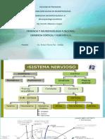 Diapositivas Demencias Cortical y Subcortical