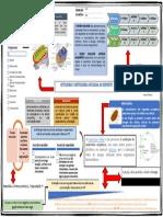Mapa de Conceitos - Cito e Histo EDF Correto