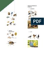 Clasificacion de Los Animales Imagenes