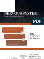 Nervous System - Gómez Fortty - g6