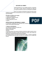 Anatomia Del Hombro