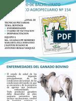 enfermedadesenbovinos-140525203020-phpapp02