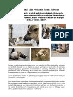 TEXTO TRATO ANIMAL EN LA CALLE.docx