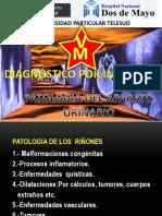 2. Patologia Del Aparato Urinario