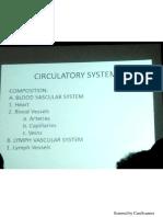 Circulatory Histo