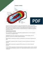 Celula Procariota Funcion y Partes