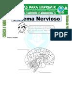 Ficha de Sistema Nervioso Para Tercero de Primaria