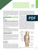 Knee Gray's Anatomy