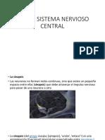 Neuro Sistema Nervioso Central
