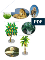 Animals for Food Chain