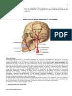 59735075 Circulacion Arterial y Venosa Del Sistema Dentario y Estructuras Perimaxilares Copia