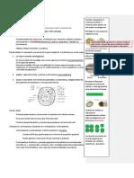 Cianofitas o cianobacterias (laboratio n°2).docx