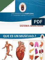 Diapositivas muscular1