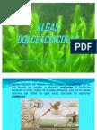 ALGAS DULCEACUICOLAS