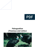 Paleo Gnat Hae