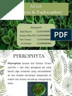 PPT Pyrrophyta & Euglenophyta