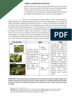 Sobre El Cuidado de Las Plantas