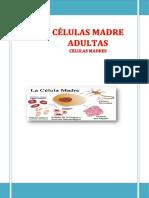 CÉLULAS MADRE ADULTAS.docx