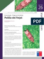 Ficha 26 Polilla Del Frejol